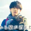 映画「世界から猫が消えたなら」はHulu・U-NEXT・Netflix・ビデオパスどれで配信してる?